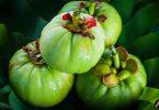 still-life-with-fresh-garcinia-cambogia-on-wooden-background-thai-herb