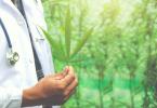 doctor holding marijuana leave