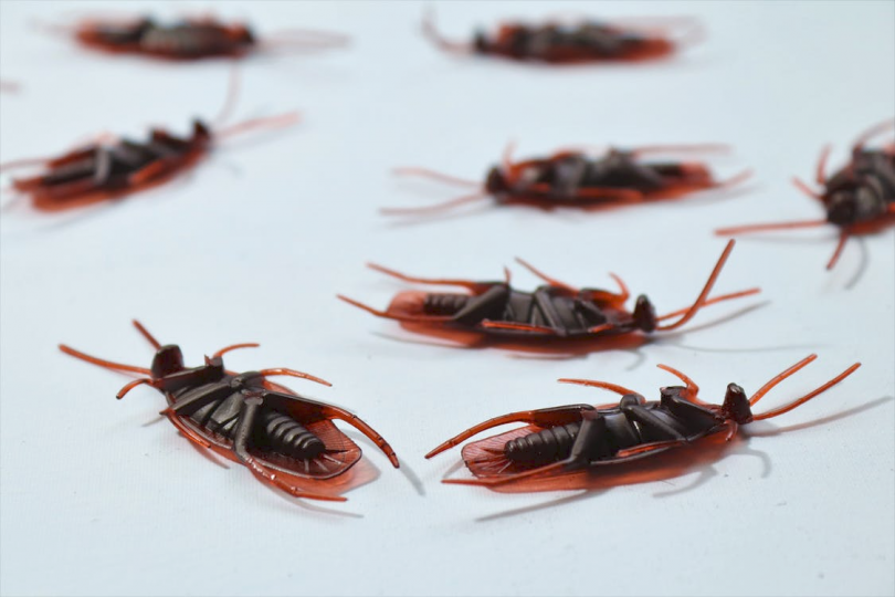a number of cockroaches lying upside-down