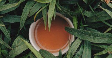 Teacup placed in between leaves